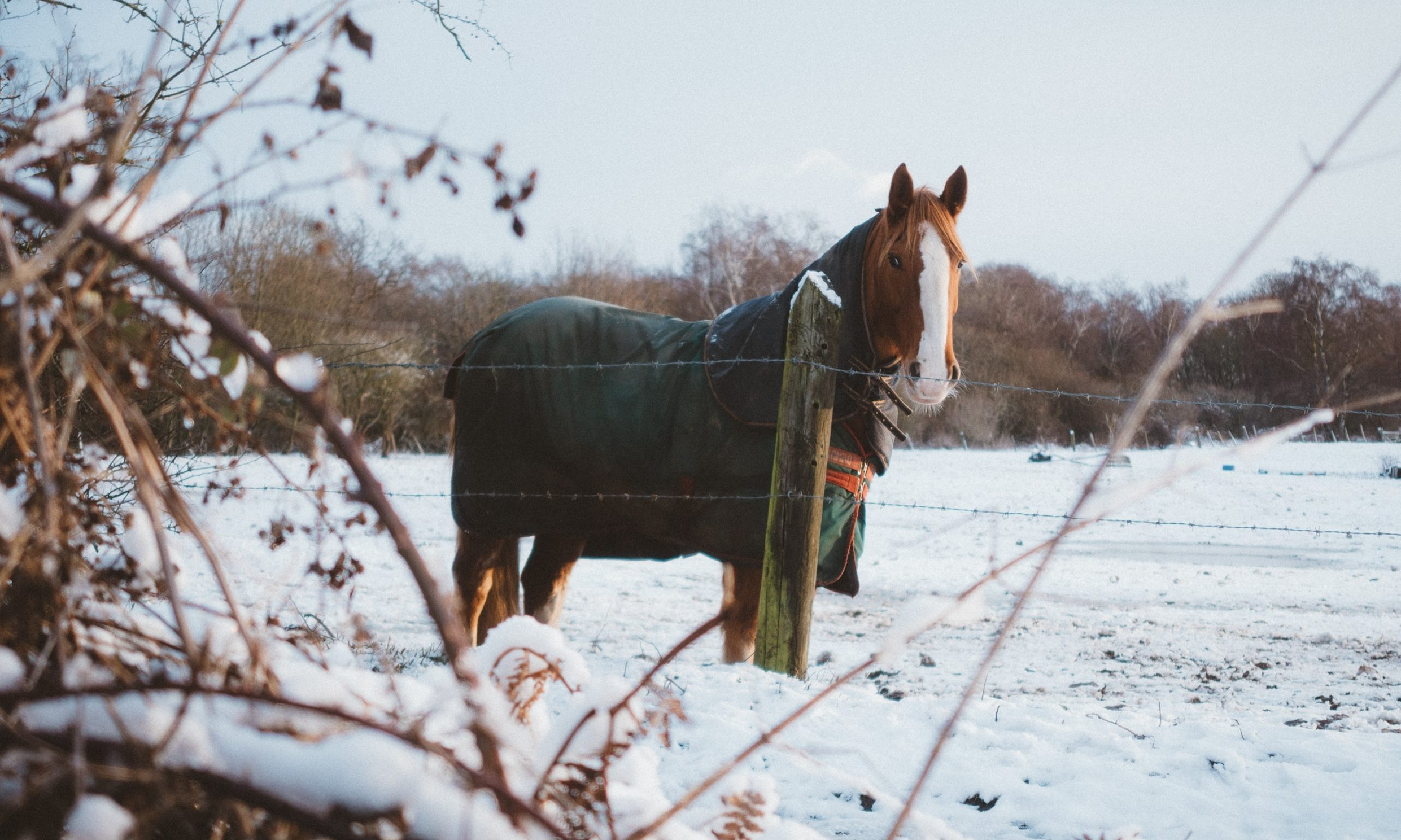 How To Clean And Waterproof Horse Blankets